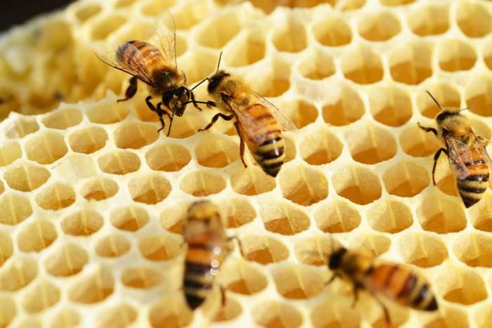 Sobre el ecologismo, las abejas, los plásticos y otras modas » ecologismo