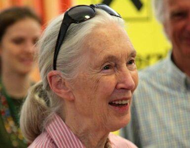 Querida Jane » Jane Goodall