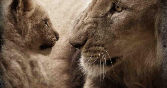 ¿Luchamos por la vida o cooperamos? 12