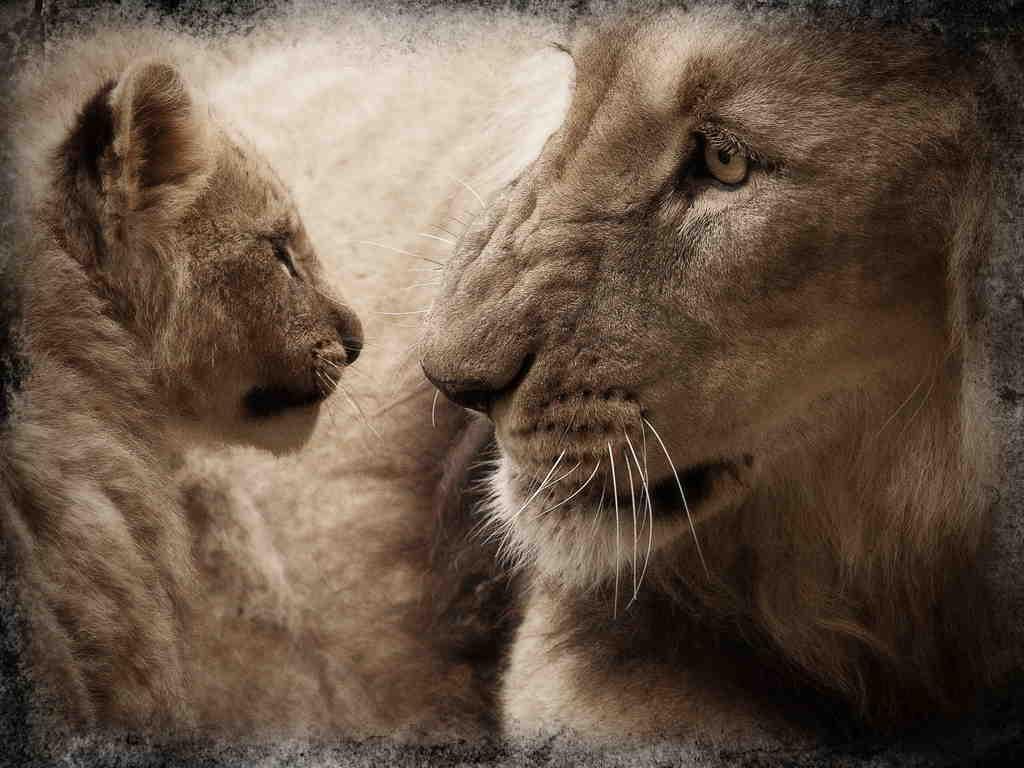 ¿Luchamos por la vida o cooperamos? 1