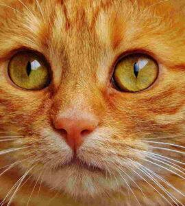 Rita Baldassarri: Ojos de gato » ojos de gato