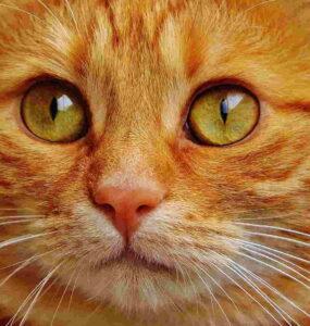 Rita Baldassarri: Ojos de gato 1
