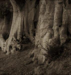 Sobre «A un olmo seco» de Antonio Machado 28