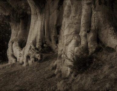 Sobre «A un olmo seco» de Antonio Machado 4