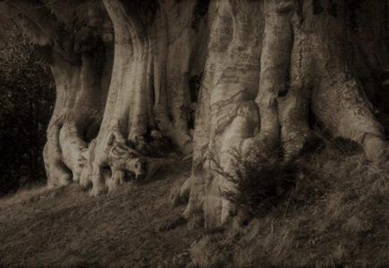 Sobre «A un olmo seco» de Antonio Machado 1