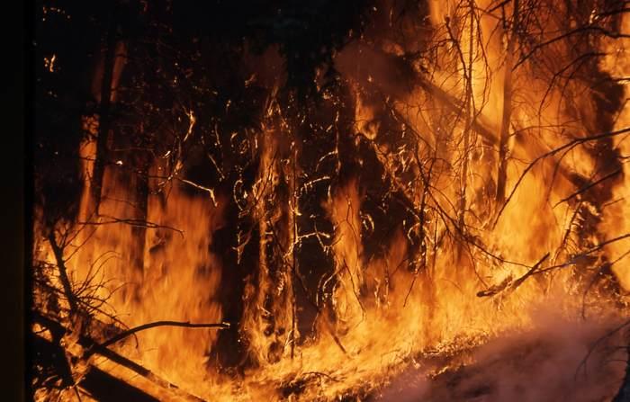 ¡Arde el bosque! 12