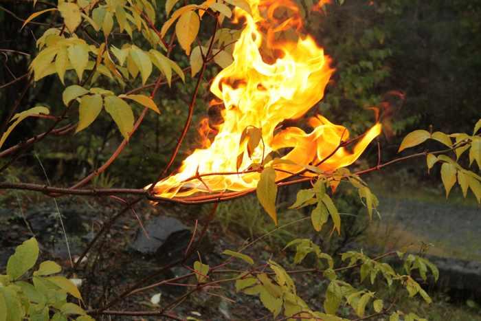 arde el bosque