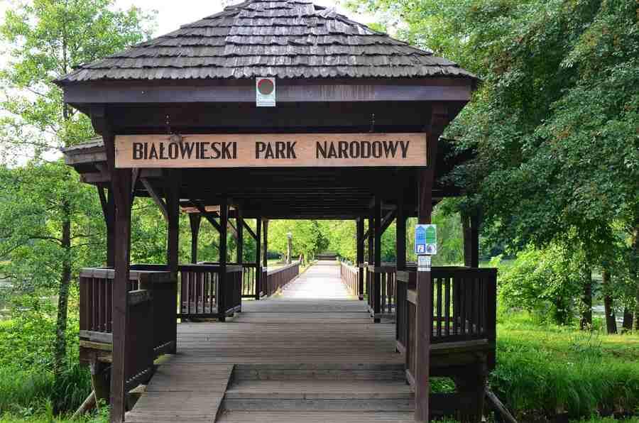 Bosque de Białowieża