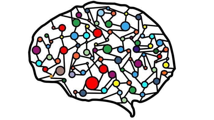 circuitos neuronales